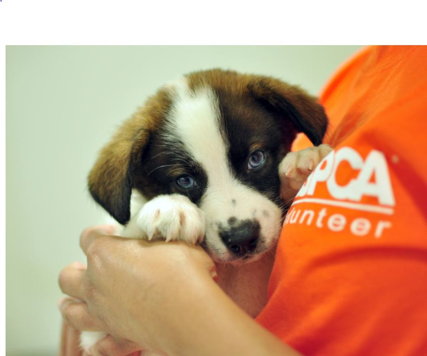 Aspca calls on extreme couponers to help their local animal shelters