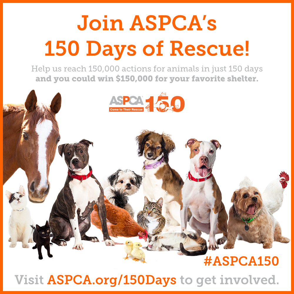 ASPCA charity