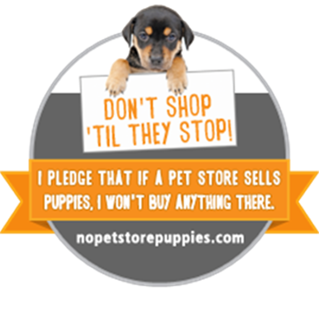 pet stores that sell puppies aspca celebrates no pet store puppies day with viral video 5261