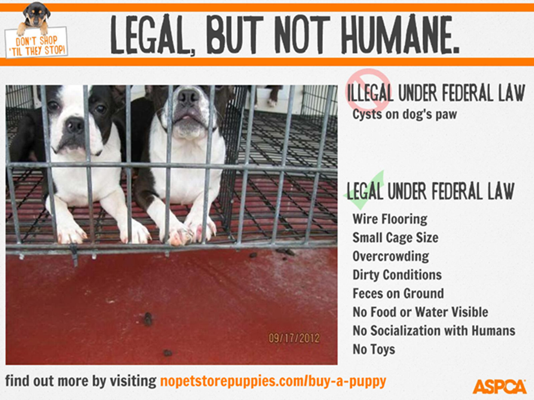 Aspca Launches Consumer Tool Linking Puppies Sold In Pet Stores With