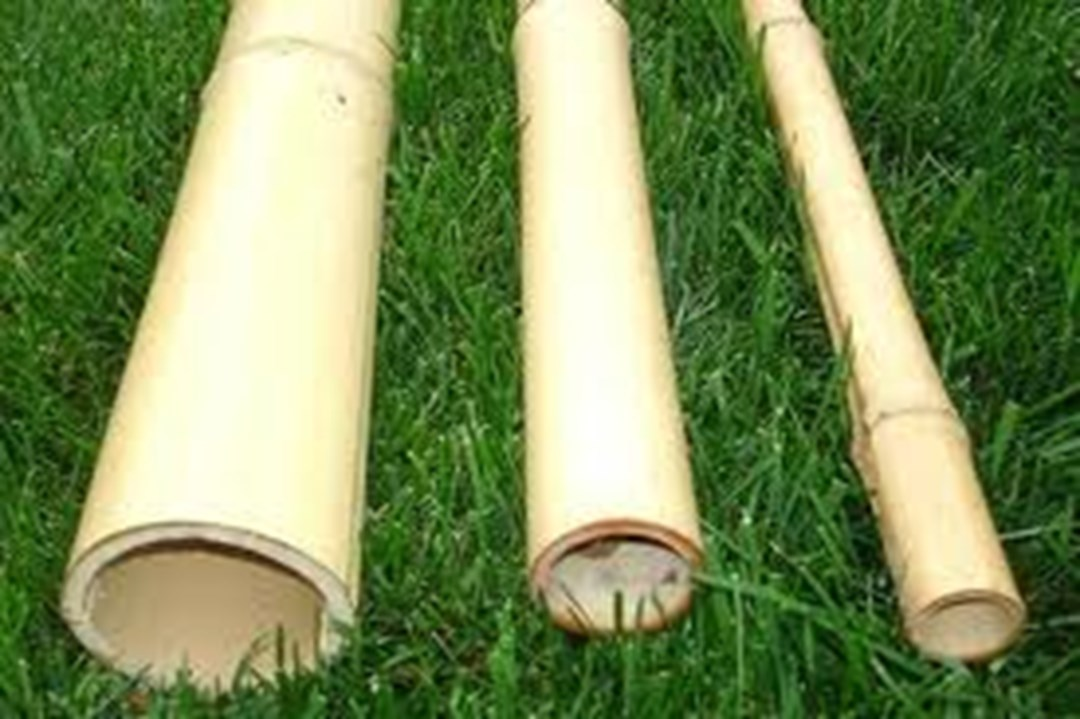 Large Bamboo Poles ~ Natural bamboo poles for sale from sunset